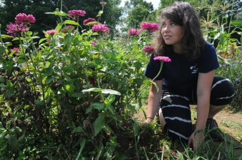 Cate Elliott pulls weeds in the Food For All garden at the University of Massachusetts Agricultural Learning Center. Purchase photo reprints »