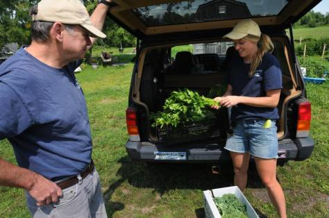 Bob Stover of Not Bread Alone takes a delivery of cucumbers, celery and cale from Sarah Berquist at the Food For All garden at the University of Massachusetts Agricultural Learning Center. Some of the vegetables are grown at Food For All and some are grown at other plots at the ALC and brought to the Food For All site for easier pick up. Purchase photo reprints »
