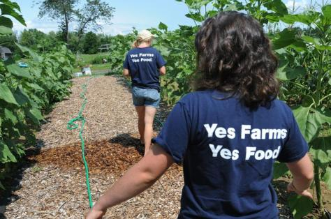 Sarah Berquist, left, and Cate Elliott manage the Food For All garden that provides food for Not Bread Alone and the Amherst Survival Center. The garden is located at the University of Massachusetts Agricultural Learning Center on N. Pleasant St. in Amherst. Purchase photo reprints »
