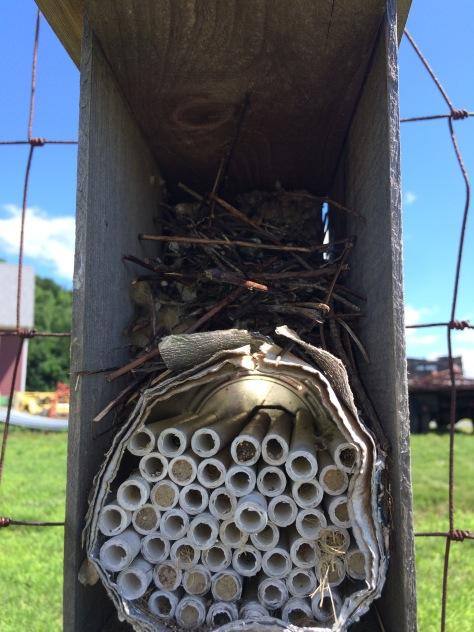 pollinator nesting tubes - 1-2 (2)
